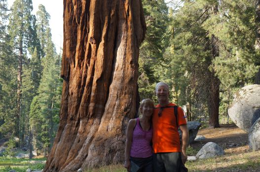 Sequoias are mind-bogglingly big and old