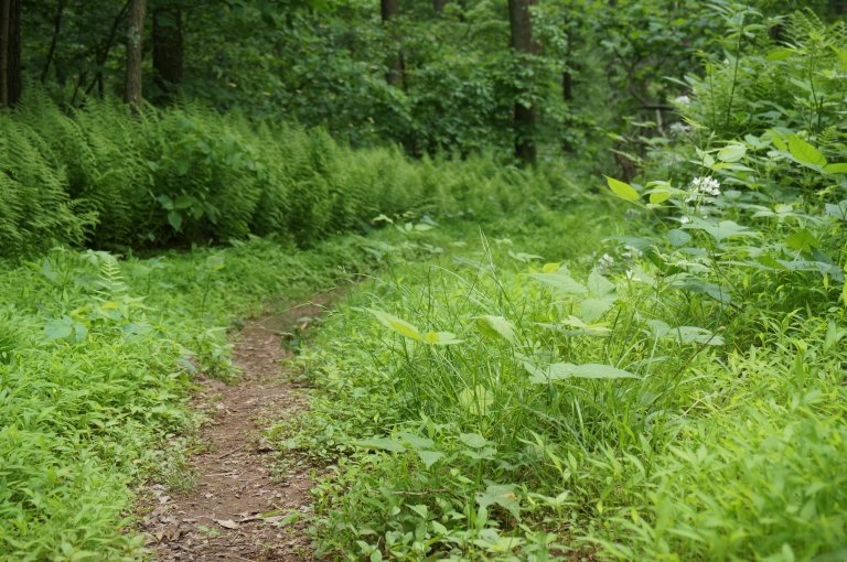 French Creek hike