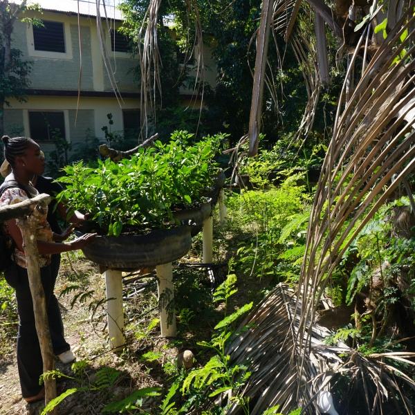 Tire garden haiti
